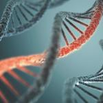 Генетика и онкология: главные вопросы