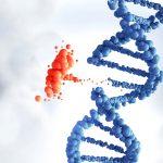 Определение мутации в генах EGFR и V600 BRAF