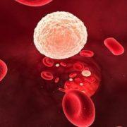 Клинический анализ крови: лейкопения и нейтропения после химиотерапии