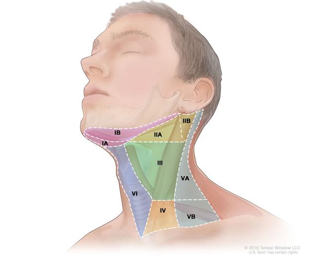 Уровни лимфатических узлов шеи